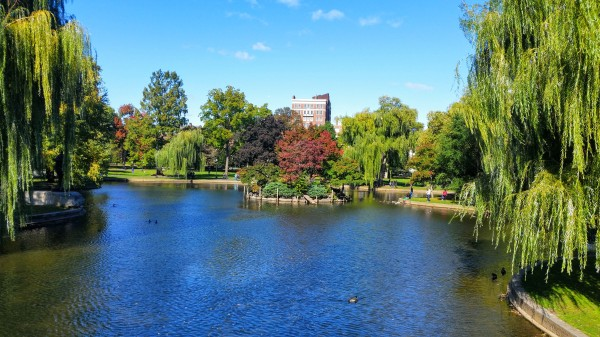 Boston Common Pond, Boston, MA