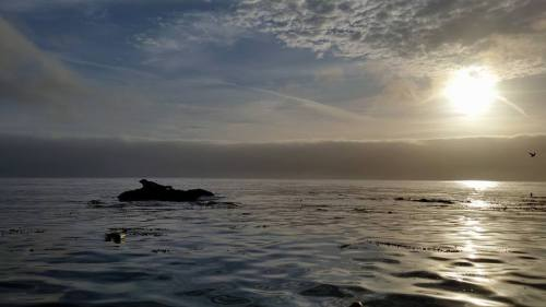 Baby Seal, Catalina Island, California