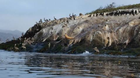 A close up of the seals and pelicans hanging out on the seal rock