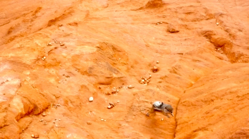 Creatures in the Valley of Fire